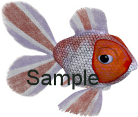 ocean fish graphics