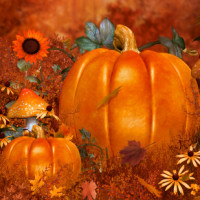 Autumn Beauty Background package
