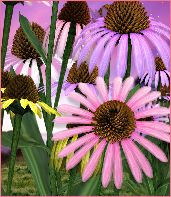 Cone flower graphics