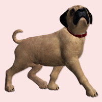 butterflywebgraphics.com English Mastiff puppy dog psp tubes for your designs