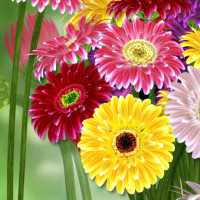 Gerbera flower stock image package