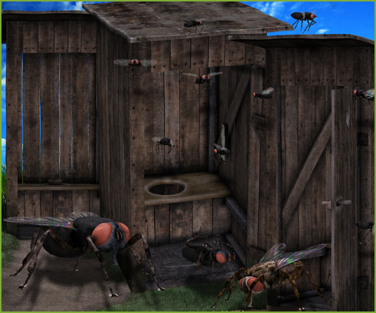 Outhouse graphics and flies