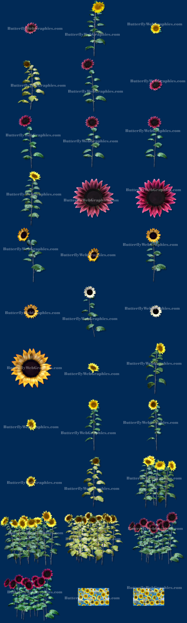 sunflower autumn clipart