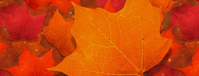 Autumn Leaf Graphics