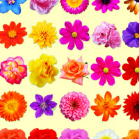 Springtime Flower Graphics