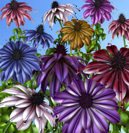 Field of Flowers Graphics