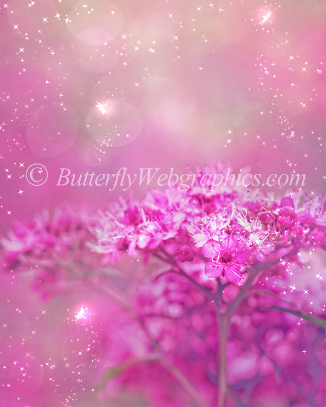 Firefly Fairy Backgrounds Graphics