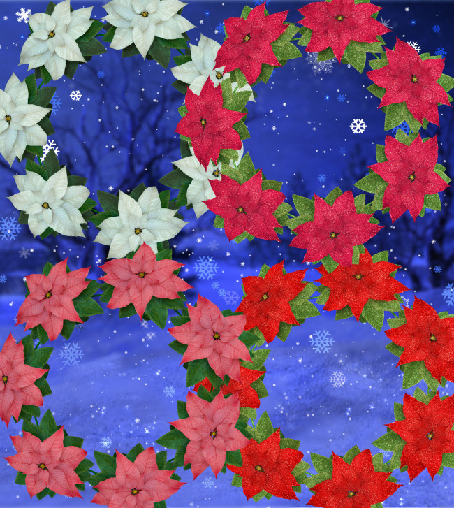 Holiday Poinsettia Graphics in the PNG format