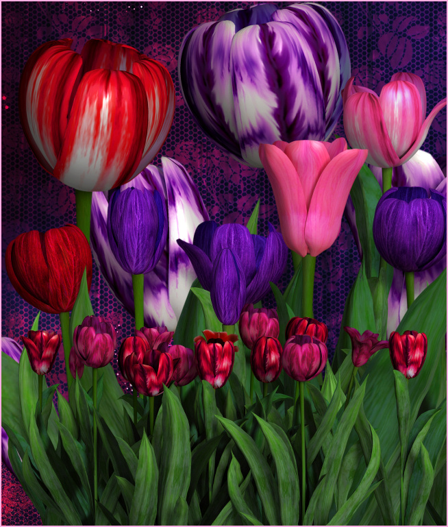 Sweetheart Tulip Graphics