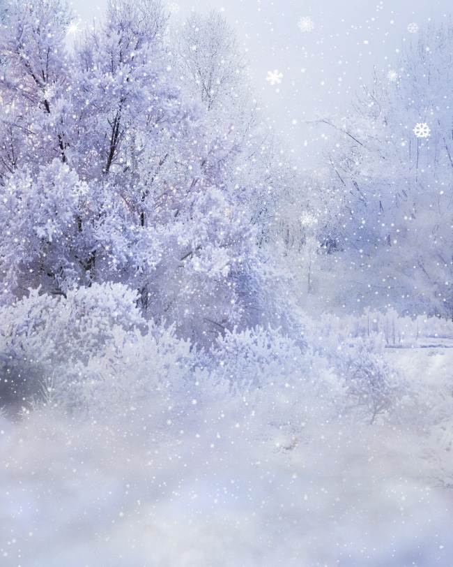 Winter Wonderland Backgrounds with winter flowers.
