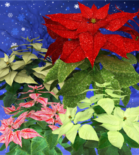 Holiday Poinsettia Graphics